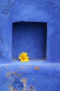 Blue Niche   sm