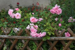 January -  Monet's Garden