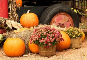 October - Country Pumpkins