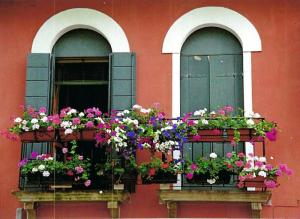 October - Window Boxes,