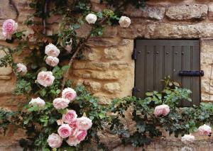 April - Rambling Roses,
