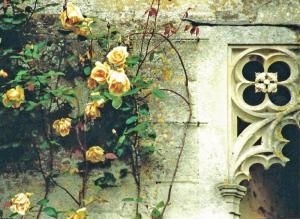 September - Castle Roses,