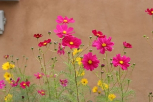 Flowers & Adobe Wall