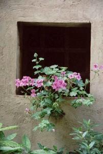 FLOWERS-010B