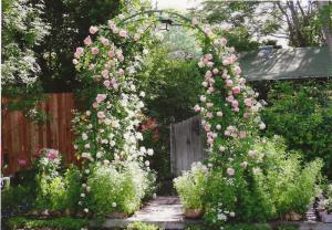 Garden Gate With Rose Arbor   A ST.