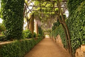 Wisteria Arbor