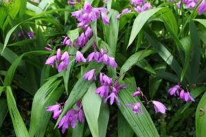 Tiny Lavender Bells