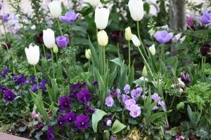 Row of White Tulips