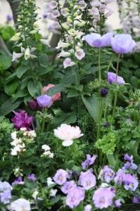 Anemones & Pansies