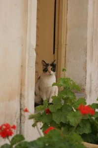 Cat in the Doorway