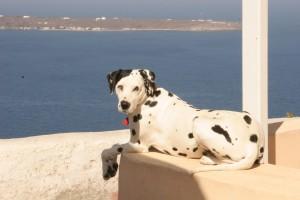Greek Dog