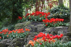 Tulip Rocks Garden