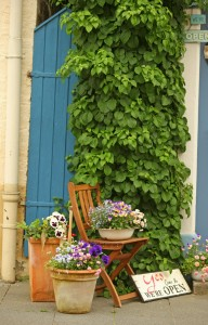 Chair and vines