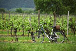 Vineyard Bike