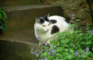 Cat & Violets
