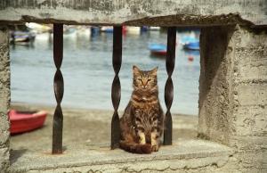 Marina Cat