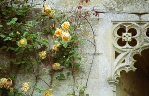 Roses at the Castle