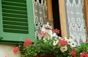 Cat at the Window Lucca