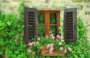 Window & flower box