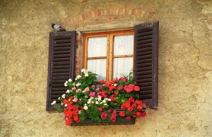 Window Box with Bird