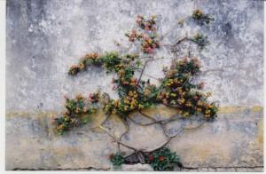 Lantana-on-a-Wall
